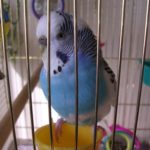 Vogel im Käfig.
